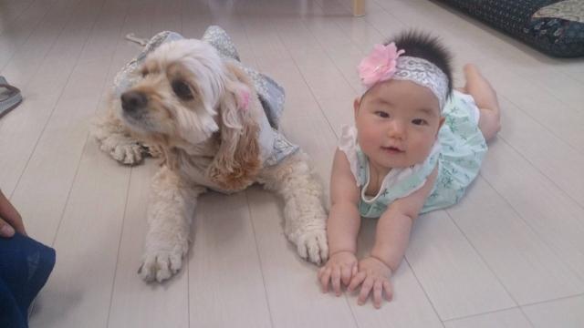 動物と子供の仲良しは教育に良い?人気のかわいいペットと子育て!