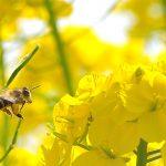 ローヤルゼリー化粧品なら山田養蜂場がイチオシ!効果・効能・口コミまとめ