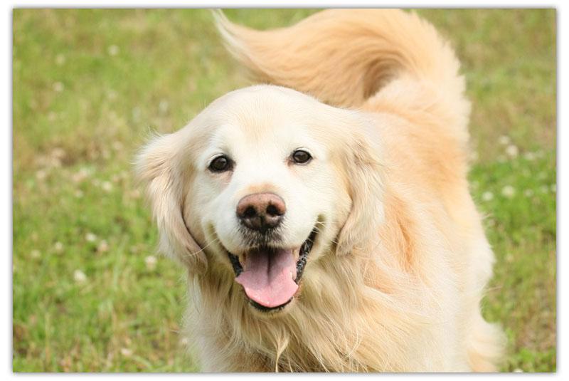 なぜこんな行動するの?「舐める」犬の行動から、いぬの気持ちを考えてみよう!