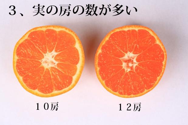 みかんの種類!美味しいミカンの選び方のポイント3つ【旬はいつ?】