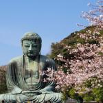 鎌倉おすすめスポット3選!江ノ島で生しらす丼食べるならどこが美味しい?<鎌倉の食べ歩き&観光まとめ>