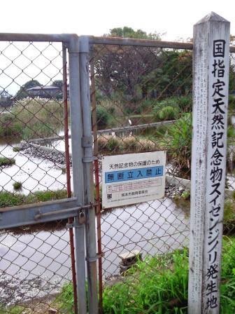 suizenji_04