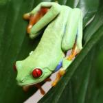 カエルの種類!ペットにしたい可愛い蛙の画像<おすすめ厳選3種>