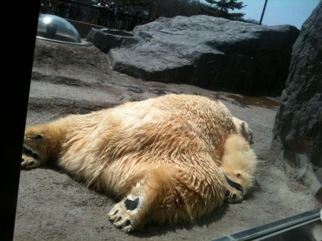 summer-bear