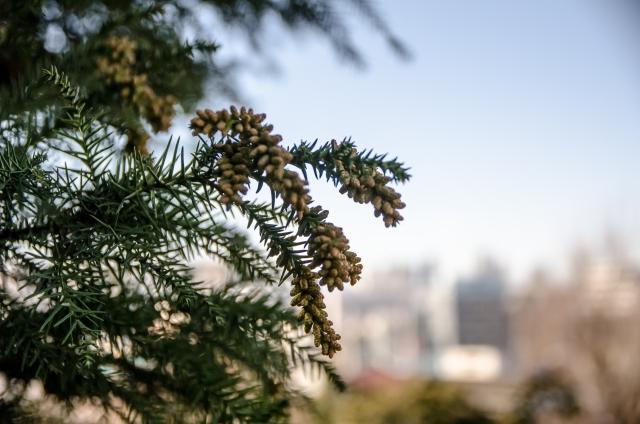 花粉アレルギーの症状を緩和する対策グッズは?花粉の流行時期って?