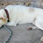 高齢犬のケアとは?介護用品や栄養を補助するサプリ・ドッグフードを紹介!