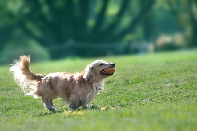 犬のグルコサミンサプリおすすめ5選!関節への効果と摂取量は?副作用ない?