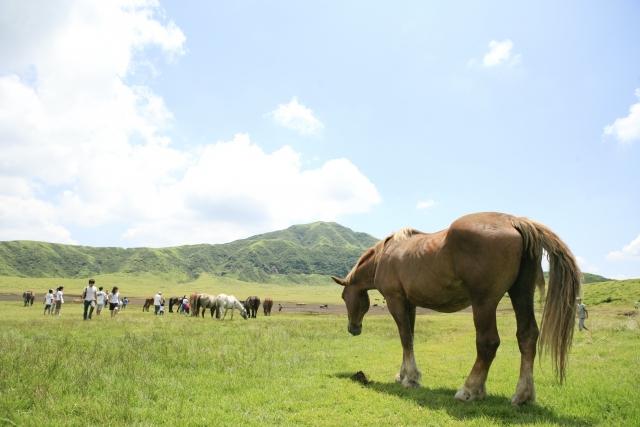 馬プラセンタサプリの人気3商品を徹底比較!成分量や効果と口コミの評価は?