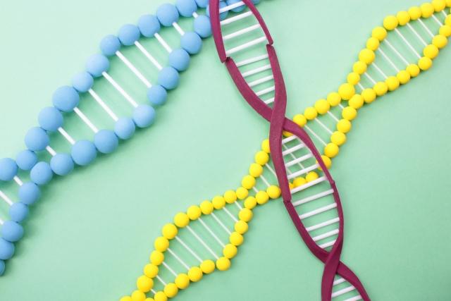 太る遺伝子のタイプがある?!体質や病気傾向も分かる検査とは!