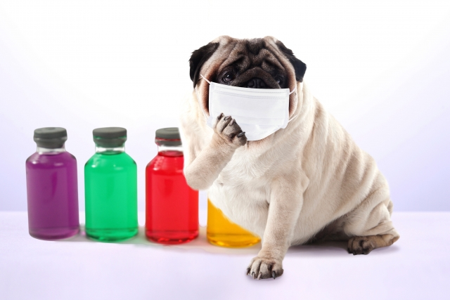 マスクでインフルエンザを乗り切る?感染を予防する効果的な方法