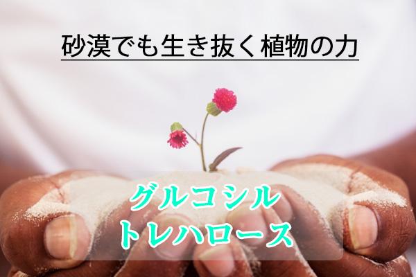 AoiCoco(アオイココ) トレハロース